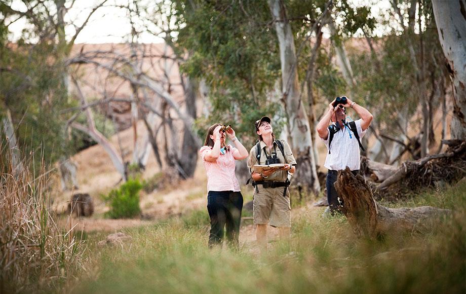 Arakaba Walk Flinders Ranges
