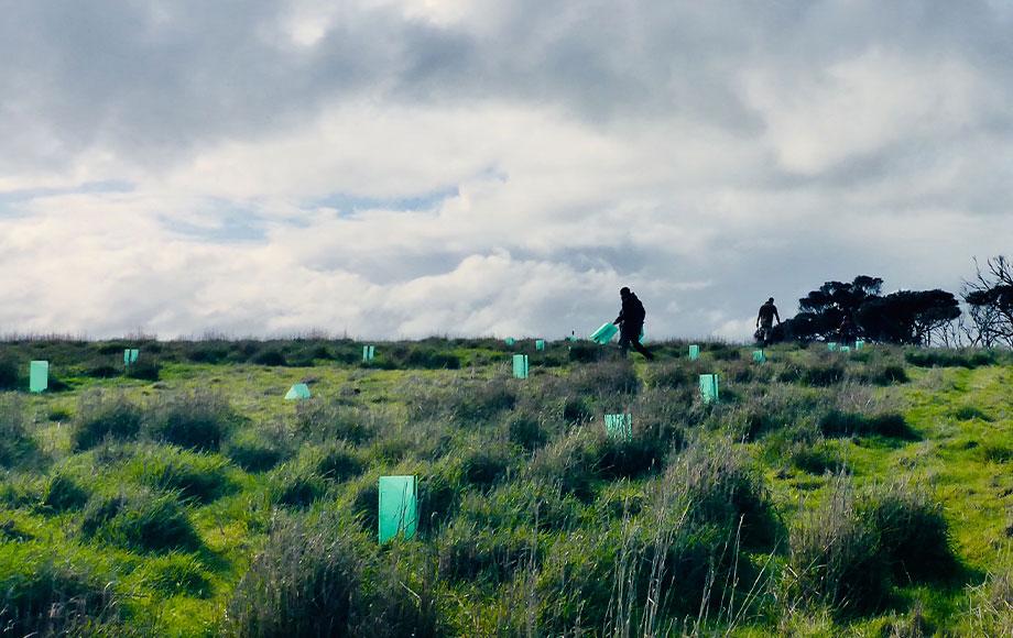Planting trees on Kangaroo Island