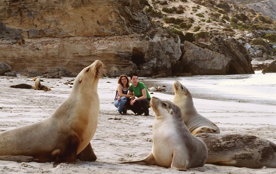 Seals on the beach at Kangaroo Island